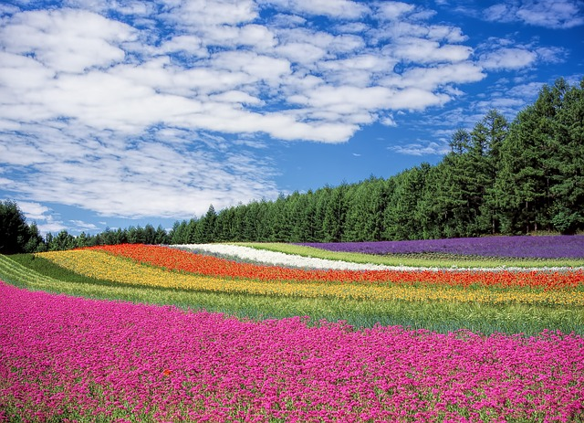 couleurs-fleurs-champs