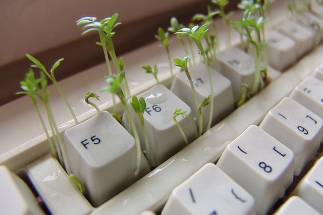 clavier-pc-herbe