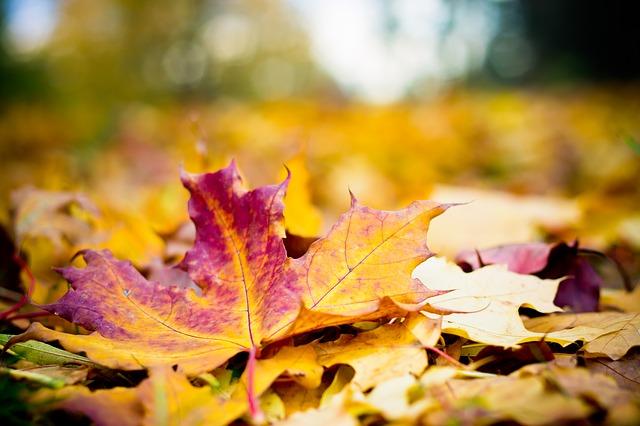 couleur-automne-jardin